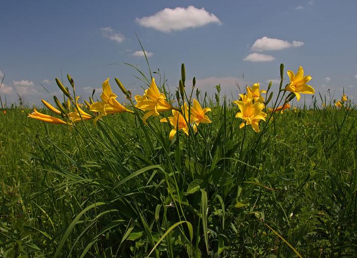 заповедник даурский цветы и цветки