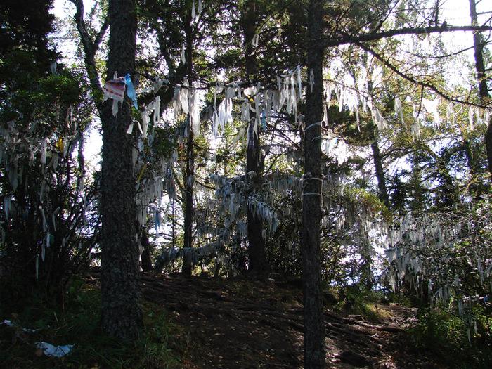 Деревья в ленточках/1415502_21 (700x525, 266Kb)
