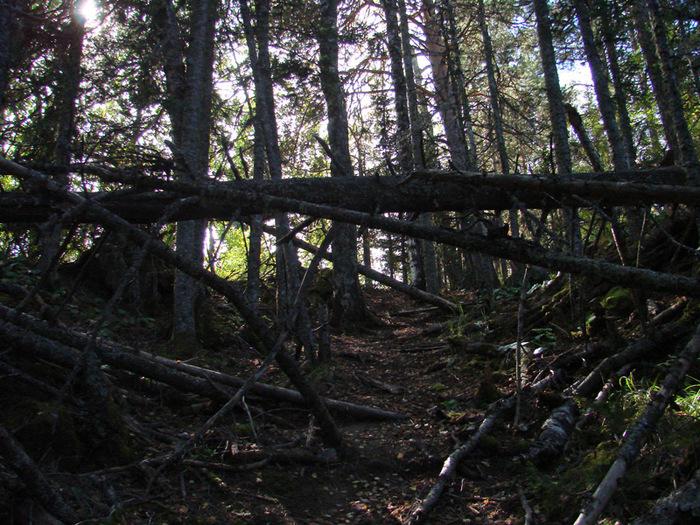 Тропа в лесу/1415502_24 (700x525, 231Kb)