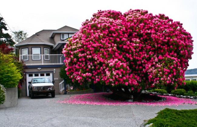 1amazing-trees-7-650x418 (650x418, 102Kb)