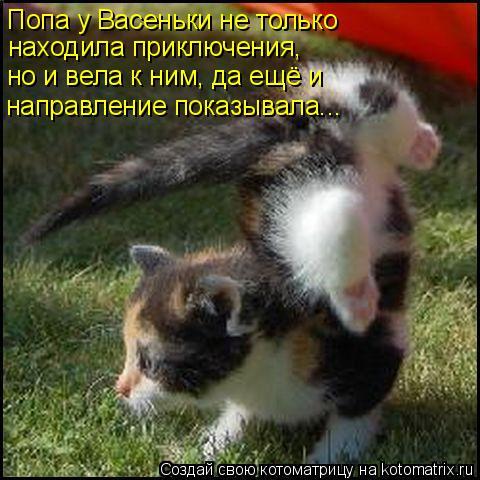 kotomatritsa_17 (480x480, 227Kb)
