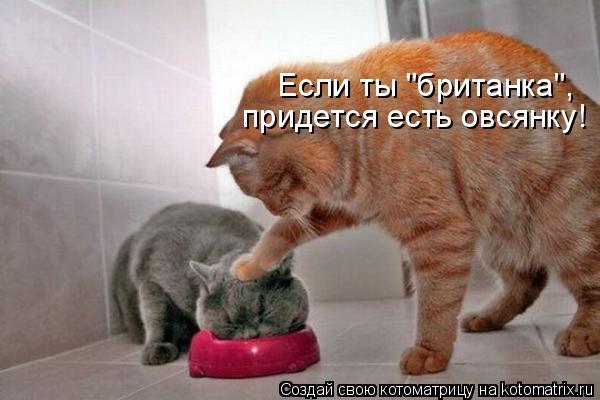 kotomatritsa_dG (600x400, 166Kb)
