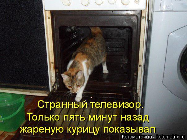 kotomatritsa_ZG (604x453, 242Kb)