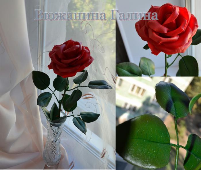 Красная роза (700x593, 416Kb)
