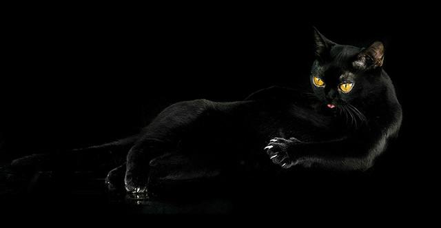 чёрная желтоглазая кошка (640x331, 41Kb)