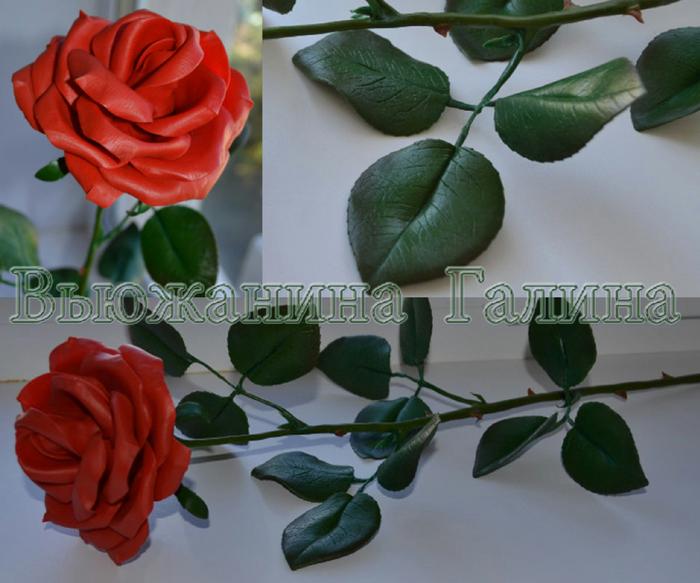 Красная роза 1 (700x583, 380Kb)