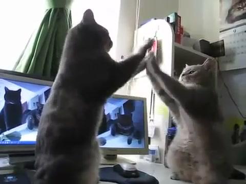 ладушки кошки