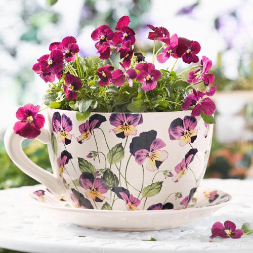 Что можно прорастить в чашечке из под чая