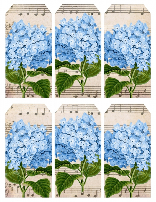 4267534_Hydrangea_in_blue__music__6_tags_printable__lilacnlavender (541x700, 353Kb)