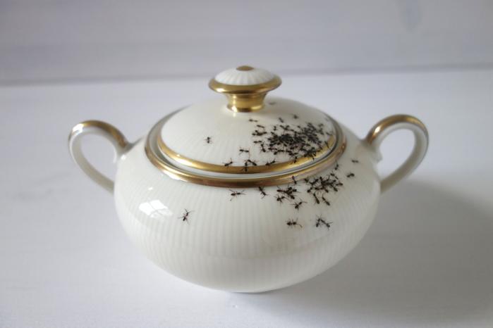 посуда с муравьями Эвелин Баклоу 9 (700x466, 177Kb)