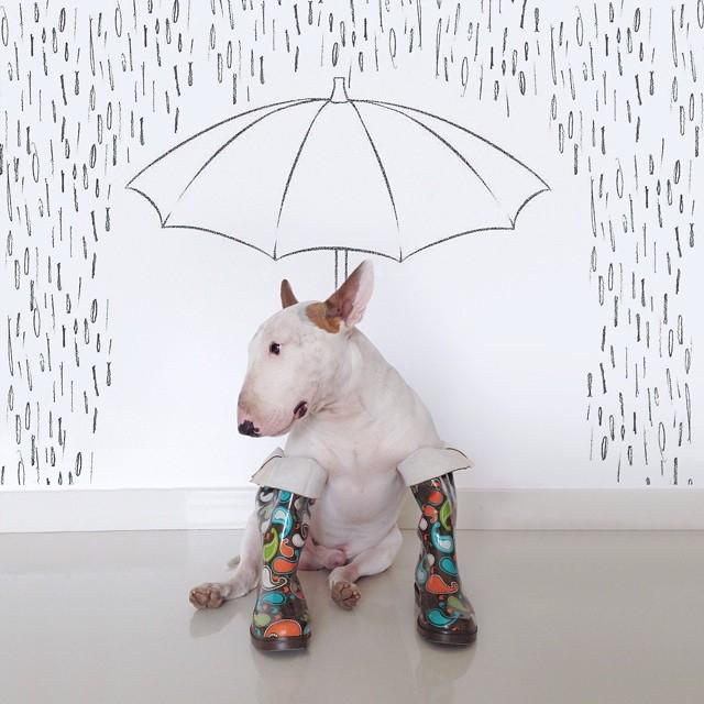 смешные фото собак 2 (640x640, 246Kb)