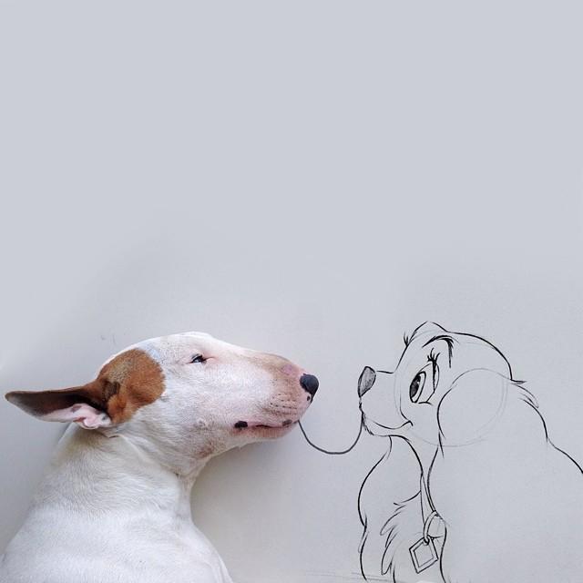 смешные фото собак 4 (640x640, 122Kb)