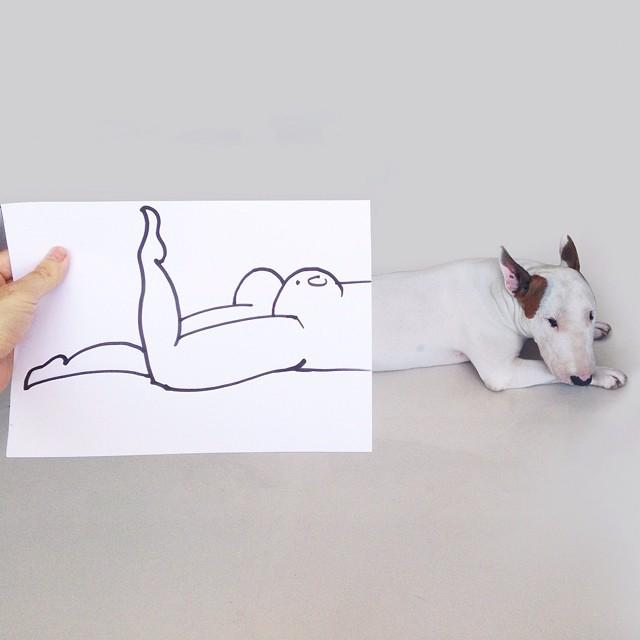 смешные фото собак 6 (640x640, 137Kb)
