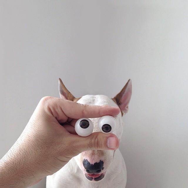 смешные фото собак 8 (640x640, 180Kb)