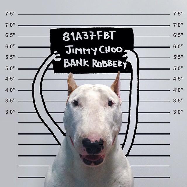 смешные фото собак 10 (640x640, 252Kb)