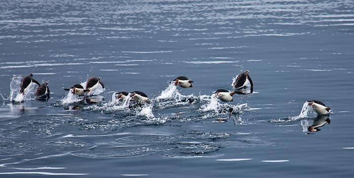 krasoti-Antarktidi-55-foto_42 (700x351, 299Kb)