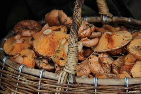 рецепт соления грибов 2/4216969_1382009358_jkz (550x367, 65Kb)