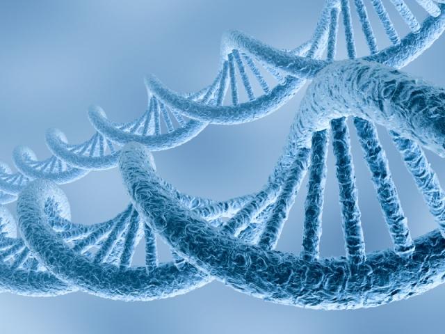 DNK cheloveka (640x480, 310Kb)
