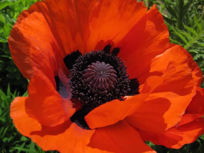 Красивые цветы от читательницы 3 (700x525, 338Kb)