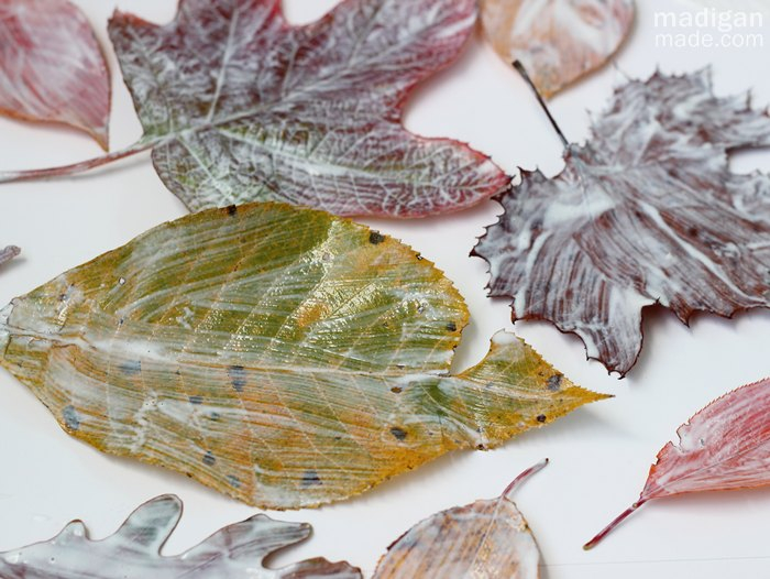 how-to-preserve-fall-leaves-with-decoupage-02 (700x526, 325Kb)