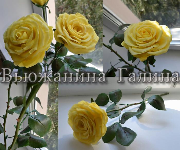 Жёлтые розы. (700x583, 425Kb)