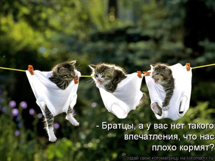 kotomatritsa_4O (700x524, 328Kb)
