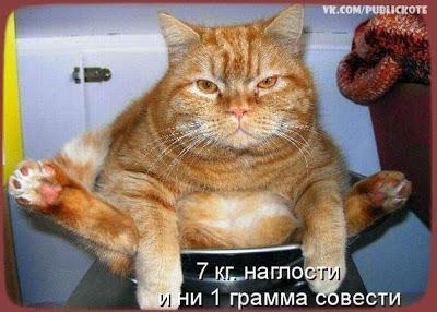 Про кота (400x286, 43Kb)