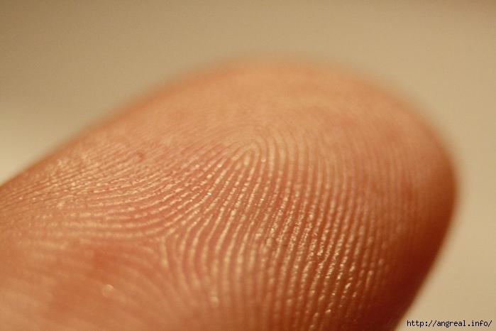 Что от нас скрывают узоры на пальцах