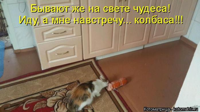 kotomatritsa_4A (700x392, 252Kb)