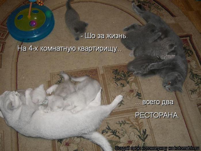 kotomatritsa_A (700x524, 308Kb)