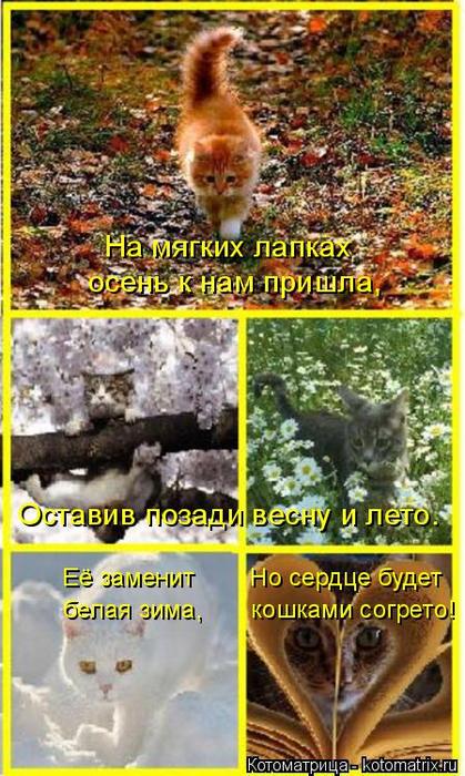 kotomatritsa_cw (419x700, 415Kb)