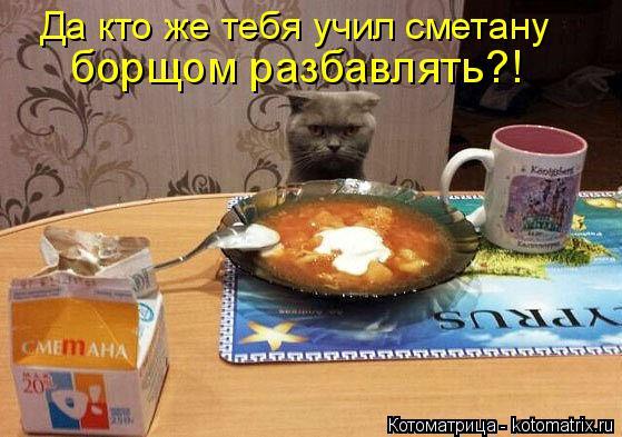 kotomatritsa_K (559x393, 229Kb)