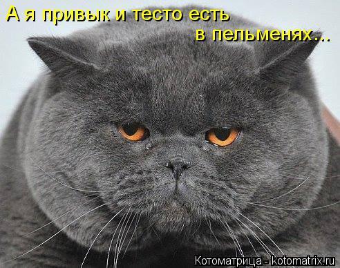 kotomatritsa_u (492x388, 176Kb)