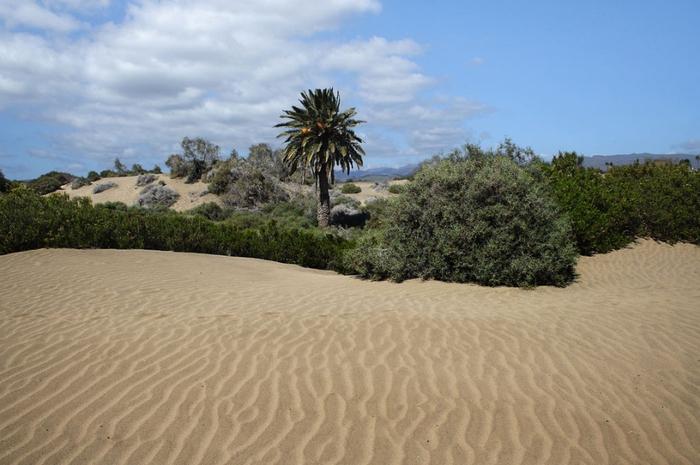 Дюны Маспаломас фото 8 (700x465, 304Kb)