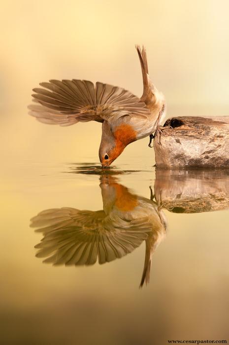 птицы12 (465x700, 223Kb)