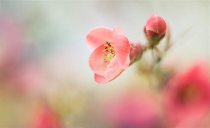 flowers 23 (700x427, 226Kb)