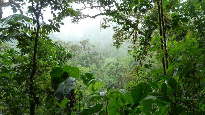 amazon_jungle_05 (700x394, 87Kb)