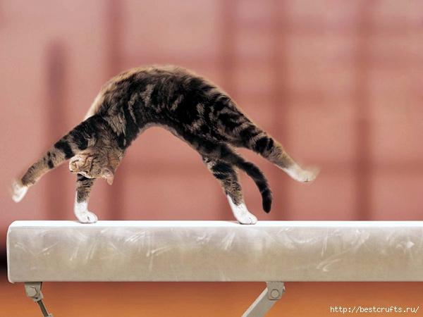 дрессировка кошек (600x450, 137Kb)