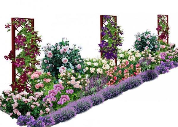 Цветущая Дача - Клуб цветоводов