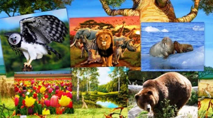Картинки с природой животными или растениями