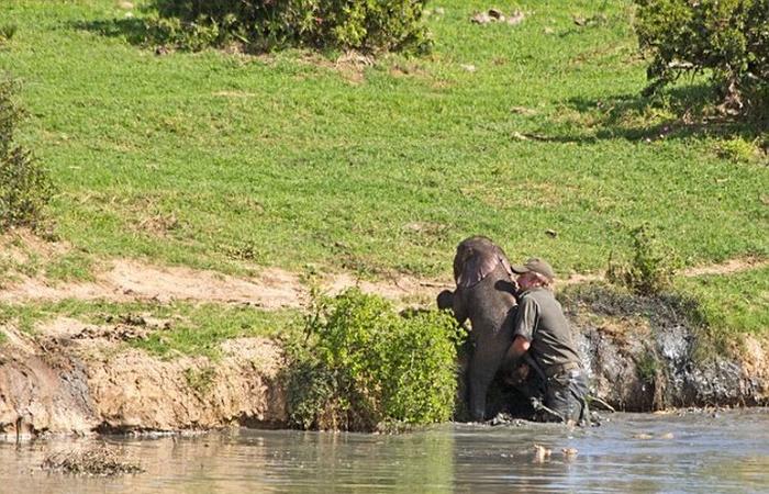 спасение слоненка фото 4 (700x450, 414Kb)