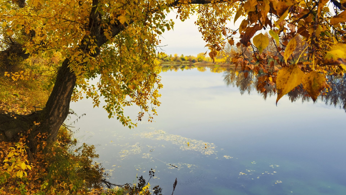 _Autumn_0057 (700x393, 412Kb)
