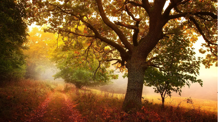 _Autumn_0058 (700x393, 458Kb)