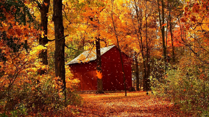 _Autumn_0081 (700x393, 521Kb)