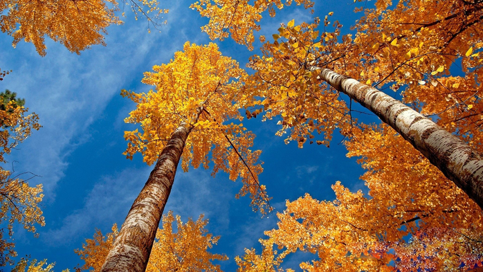 _Autumn_0089 (700x393, 496Kb)