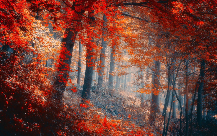 _Autumn_0106 (700x437, 553Kb)