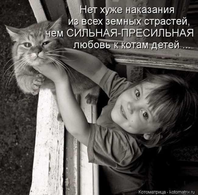 1342938258_kotomatritsa_01 (650x639, 154Kb)