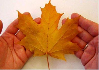 Розы из осенних листьев своими руками (7) (400x282, 92Kb)