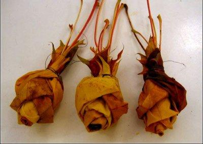 Розы из осенних листьев своими руками (23) (400x285, 103Kb)