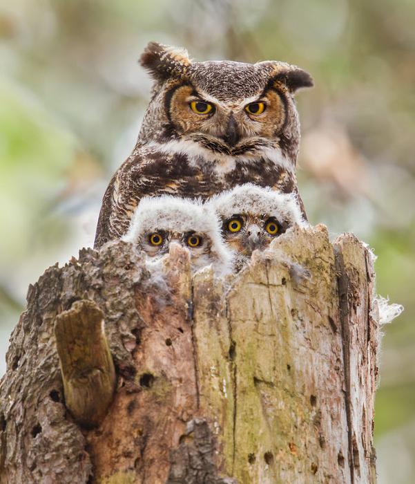 Семейные портреты зверей и птиц